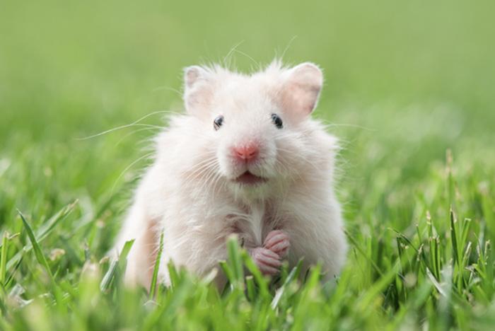 Rodent Control Kent Wa Mouse Control Kent 253 458 4200