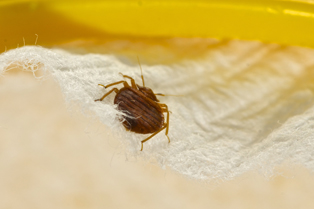 bed-bug-removal-covington-wa2