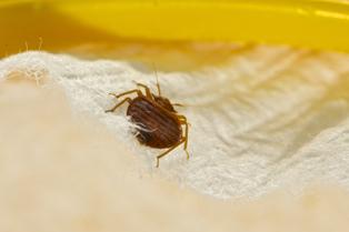 Bed Bug Removal Tacoma Wa Bed Bug Control Tacoma 253 777 1960 Bed Bug Exterminator